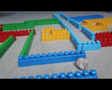 OBSTACLE COURSE MAZE FOR MY HAMSTER!! (INSANE) | Vlogs | FaZe Rug - obstacle course maze for my hamster insane vlogs faze rug