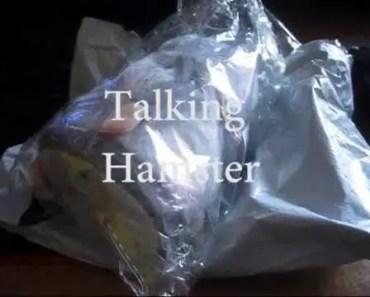 talking hamster review - talking hamster review