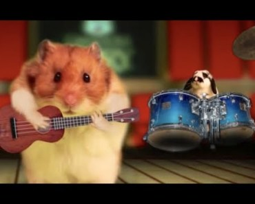 Talking Hamster Sings 'Strong for Nuts' Music Video - talking hamster sings strong for nuts music video