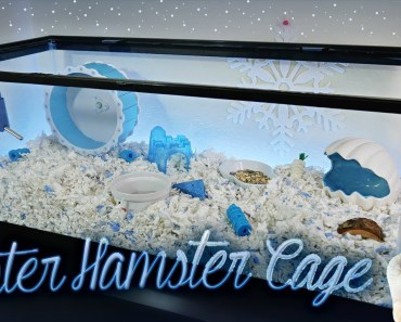 Winter Hamster Cage | Dwarf Hamster Cage - winter hamster cage dwarf hamster cage