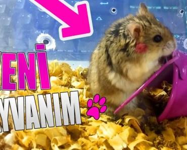 YENİ EVCİL HAYVANIM HAMSTER !! (PSİKOPAT ÇIKTI) - yeni evcil hayvanim hamster psikopat cikti