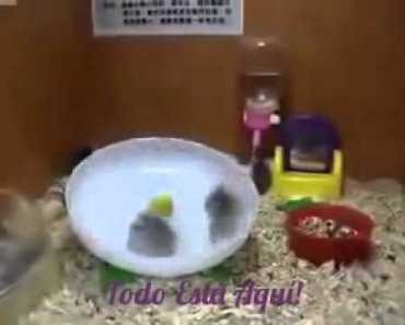 Funny Hamster - 1517877757 funny hamster