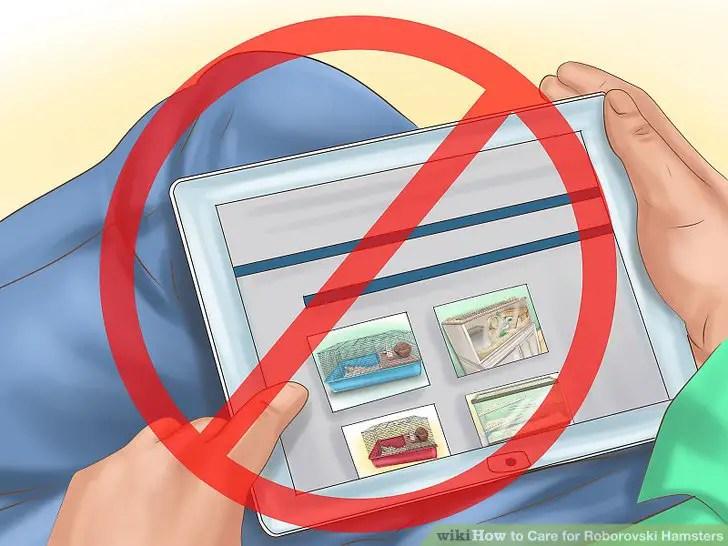 Do not buy hamster online