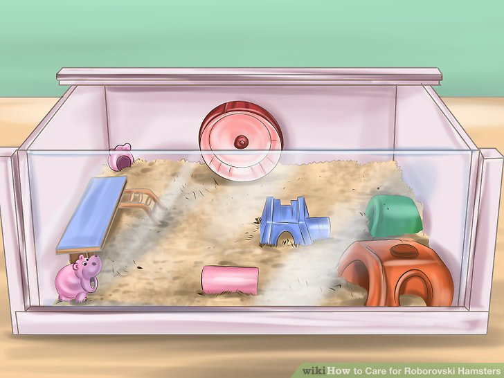 Place toys and an exercise wheel in the habitat