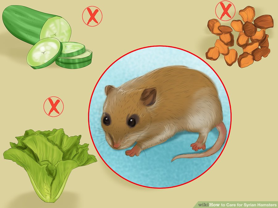 Avoid feeding your hamster foods that are not good for it