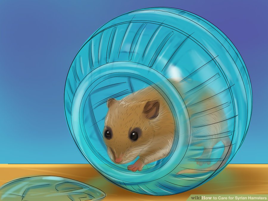 Relocate the hamster while you clean its cage