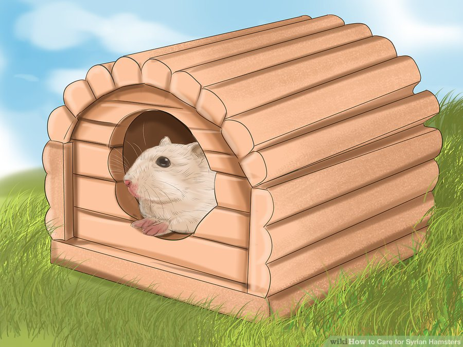 """Buy a """"hamster house"""" for your hamster to stuff with nesting material so it feels safe and cozy"""