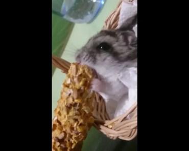 A Cute and Funny Hamster - a cute and funny hamster