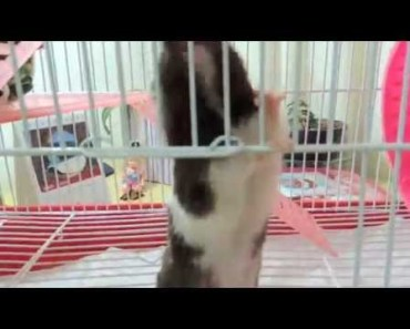 A Fuga do Hamster Mike - a fuga do hamster mike