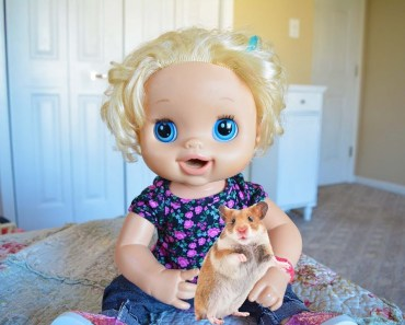 Baby Alive Molly's Book Report on Hamsters! - baby alive mollys book report on hamsters