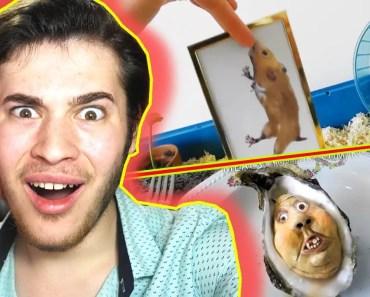 BİR ADAMIN ÖĞLE YEMEĞİ (HAMSTER VE MİDYE) - bir adamin ogle yemegi hamster ve midye