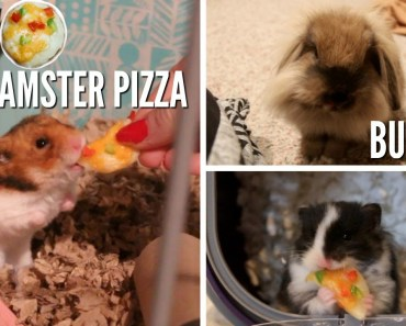 BUNNIES AND DIY HAMSTER PIZZA - bunnies and diy hamster pizza