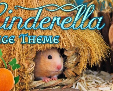CINDERELLA Hamster Cage Theme! (Kashi's Playcage) - cinderella hamster cage theme kashis playcage