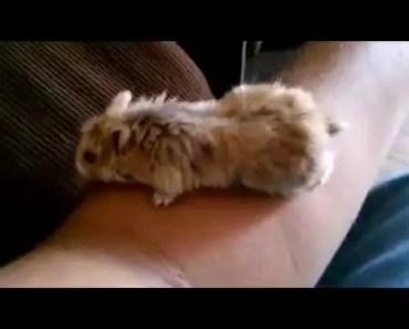 Funny hamster :D - funny hamster d