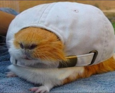 Funny Hamsters - A Cute And Funniest Hamster Videos Compilation || CUTE OVERLOAD - funny hamsters a cute and funniest hamster videos compilation cute overload