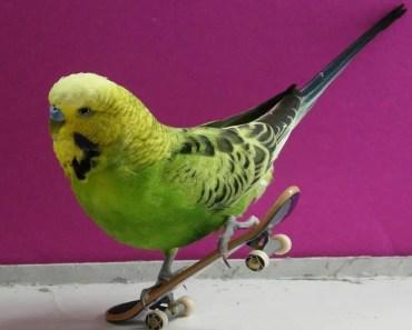 Funny Parrots Compilation - funny parrots compilation