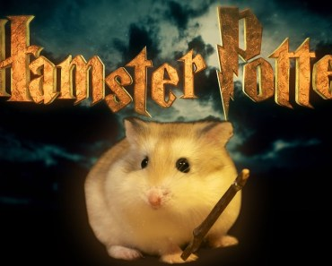 Hamster Potter - 'Harry Potter' with Hamsters - hamster potter harry potter with hamsters