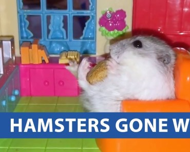Hamsters Gone Wild - hamsters gone wild