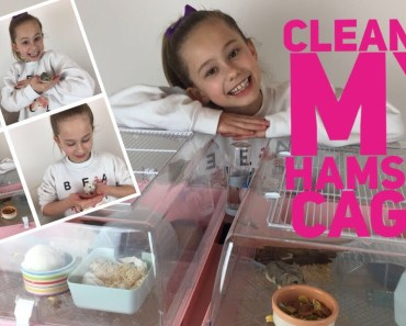 Meeting My Hamsters & Cleaning Their Cages - meeting my hamsters cleaning their cages