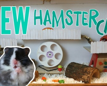 NEW DIY HAMSTER CAGE - new diy hamster cage