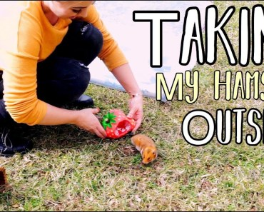 Taking My Hamster Outside | Hamster Playing - taking my hamster outside hamster playing