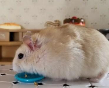 Tiny Hamster In His Tiny Kitchen - tiny hamster in his tiny kitchen