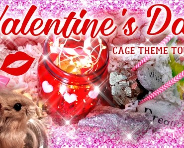 VALENTINE'S DAY CAGE THEME TOUR (starring CoCo & Cupcake) for kids! | by Jo Sunshine - valentines day cage theme tour starring coco cupcake for kids by jo sunshine