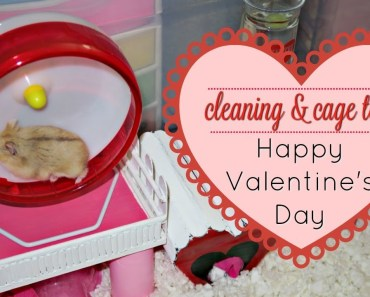 Valentine's Day Hamster Cage Tour! (Cleaning Timelapse) - valentines day hamster cage tour cleaning timelapse