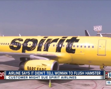 Woman considering suing Spirit Airlines after flushing hamster - woman considering suing spirit airlines after flushing hamster