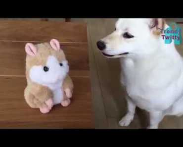FUNNY TALKING HAMSTER - 1520473016 funny talking hamster