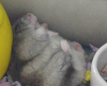 My funny hamster - 1521535144 my funny hamster