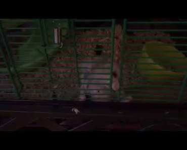 My hamster - 1521680530 my hamster