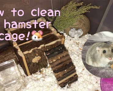 How I clean my hamsters cage! - 1521714112 how i clean my hamsters cage