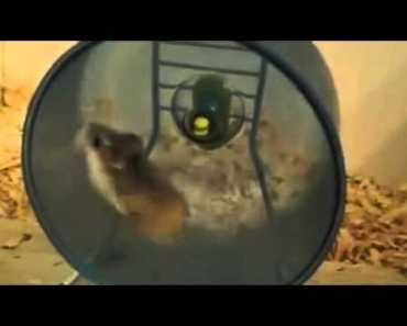 88McSwift | Try not to laugh | hamsters are OP! - 88mcswift try not to laugh hamsters are op