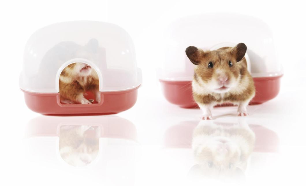 How to clean Your Hamster
