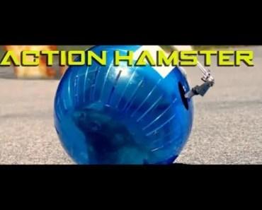 Action Hamster (Adorable!) - action hamster adorable