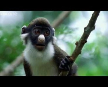 ANIMAL CRACKERS (The Best of BBC One's Walk On The Wild Side) [Shamrock Edit] (HQ) - animal crackers the best of bbc ones walk on the wild side shamrock edit hq