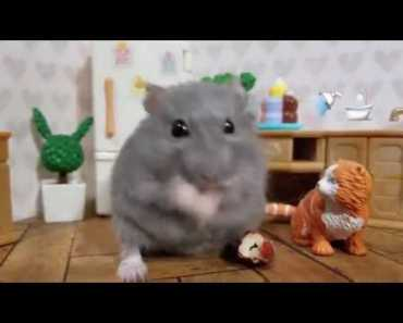 Baby Hamster Tries To Eat A Peanut [Cute Animal Vid] - baby hamster tries to eat a peanut cute animal vid