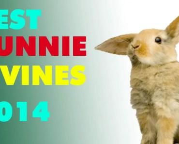 Best Bunnie Vines 2014 - best bunnie vines 2014