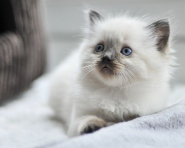 Cutest Fluffy Kittens Video! So Adorable! - cutest fluffy kittens video so adorable