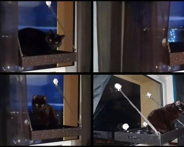 D.I.Y Window Cat Bed/Perch - d i y window cat bed perch