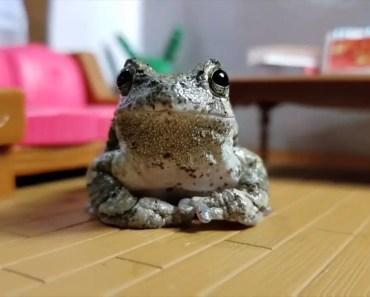 frog eating cricket [Cute Animal Vid] - frog eating cricket cute animal vid