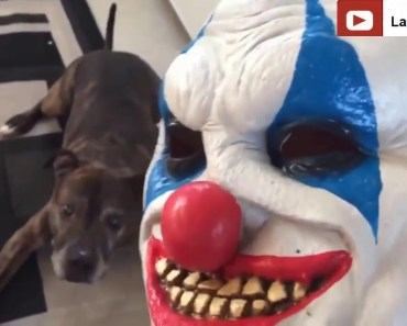 Funny Cats And Dogs Scared Of Halloween - Funny Cat & Dog Vines compilation 2018 - YouTube - funny cats and dogs scared of halloween funny cat dog vines compilation 2018 youtube