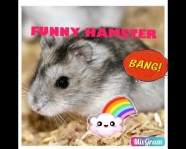 FUNNY HAMSTER - Zoé Life - funny hamster zoe life