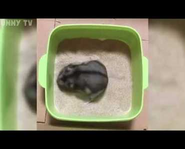 Funny Moments Hamster Edition 1 - funny moments hamster edition 1