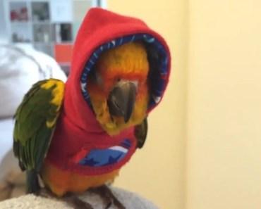 Funny Parrots - Funniest Parrot Videos 2018 - funny parrots funniest parrot videos 2018