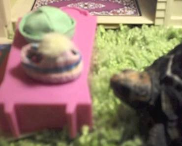 Funny Tortoise and Hamster - funny tortoise and hamster