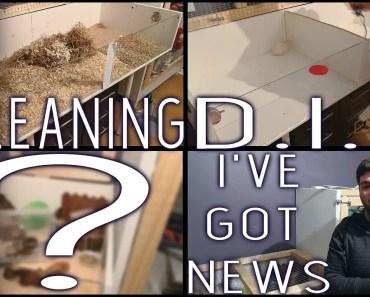Hamster Cage Clean   New Pet   D.I.Y - Timelapse - hamster cage clean new pet d i y timelapse
