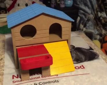 Hamster haul - hamster haul
