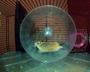 Hamster in SlowMotion - hamster in slowmotion